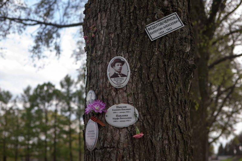 фото могилы брата путина на пескарёвском кладбище тут доставал
