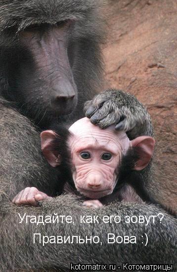 http://forum.sibmama.ru/usrpx/13254/13254_358x550_25143_358x550_L_1_1.jpg