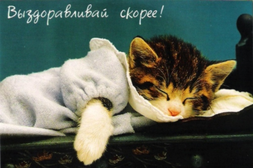 Открытка котенок поправляйся
