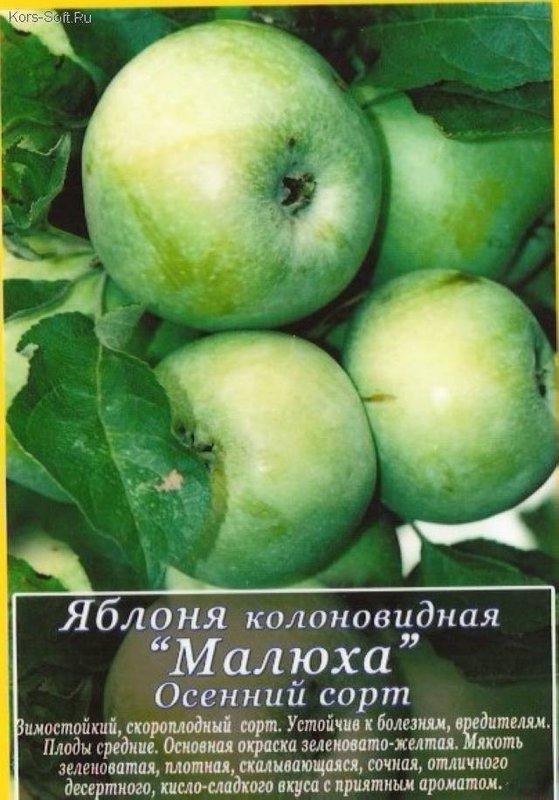 сорта колоновидных яблонь описание и фото снимок