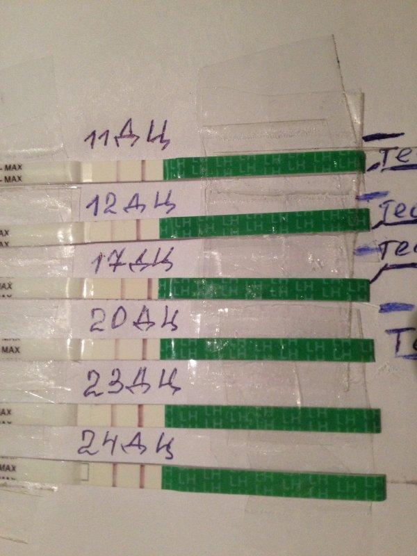 1df7c38d9a33 Вот мои тесты на овуляцию. Сегодня контрольная полоска появилась раньше.  Последний положительный.