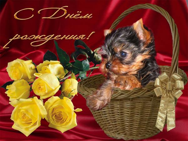 Казанской, йоркширский терьер открытка с днем рождения
