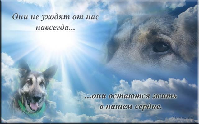 Собачий век недолог... жаль...