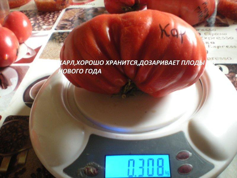 Подарок моей жене - Каталог сортов томатов с фото - форум - Томат 34
